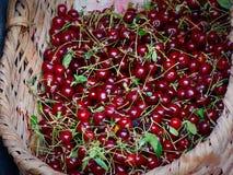 Cherry i korg Royaltyfria Foton