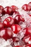 Cherry with ice. Berries macro Stock Photos