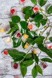 Cherry in ice cube with branch Royalty Free Stock Photography
