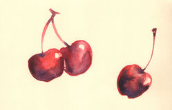 Cherry illustration Stock Images