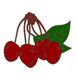 Cherry illustration Royalty Free Stock Image