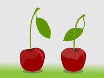 Cherry Ilustration. For any project design, easy to Edit,. EPS 10 stock illustration