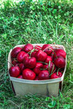 Cherry inside wooden  basket Royalty Free Stock Photo