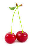 Cherry isolated Stock Photos