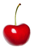 Cherry isolated Royalty Free Stock Photos