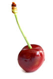 Cherry isolated Stock Photography