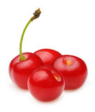 Cherry isolated Stock Images