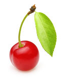 Cherry isolated Royalty Free Stock Image