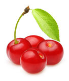 Cherry isolated Stock Image