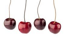 Cherry isolerad white Fyra bär som hänger i luften Arkivfoto