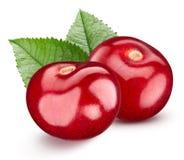 Cherry isolerad white royaltyfria foton