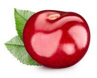 Cherry isolerad white royaltyfri bild