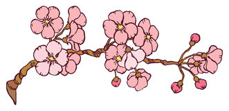 Cherry or japan sakura branch Stock Images