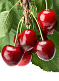 Cherry with leaf Royalty Free Stock Image