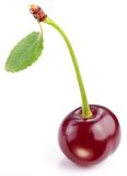 Cherry with leaf Stock Photography