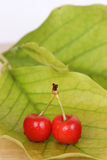 Cherry with leaf background Royalty Free Stock Photos