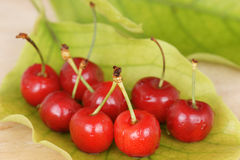 Cherry with leaf background Royalty Free Stock Photography