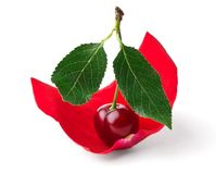 Cherry like sail in rose petals Stock Image