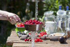 Cherry liqueur manufacturer, cherries washing Royalty Free Stock Photography