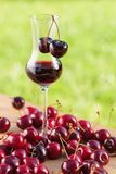 Cherry liquor and juicy berries . Cherry liquor and juicy ripe berries Royalty Free Stock Images
