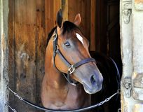 Cherry Lodge - asilo Saratoga del caballo fotos de archivo