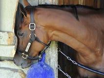 Cherry Lodge - asilo Saratoga del caballo imagenes de archivo