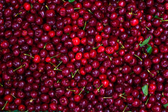 Cherry 5 Royalty Free Stock Image