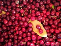 Cherry mania colored part 2 stock photo