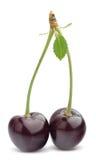 Cherry med leafen Arkivfoto