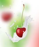 Cherry with milk splash. Fresh Cherry with milk splash Royalty Free Stock Photography