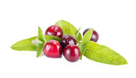Cherry and mint leaves Royalty Free Stock Photography