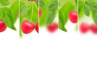 Cherry mix Royalty Free Stock Photo