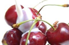 Cherry mjölkar v Royaltyfria Foton