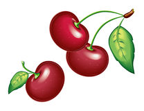 Cherry,  model with  EPS file Stock Photo