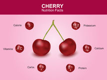 Cherry nutrition facts, cherry fruit with information, cherry vector.  royalty free illustration