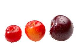 Cherry olika tre Arkivfoto