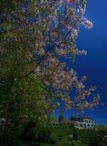 Cherry Orchard royaltyfri fotografi
