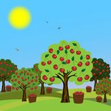 Cherry orchard. Cherry tree in the garden, vector image Royalty Free Stock Photography
