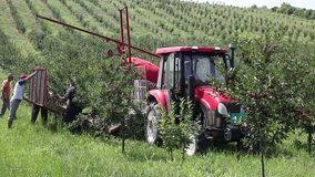 Cherry orchard farmers with tractor and harvesting machine