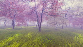 Cherry orchard in full bloom. Basking in sunlight and pink flower petals falling down on the ground covered with fresh green grass. Realistic 3D animation stock video footage