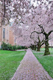 Cherry Path Royalty Free Stock Images