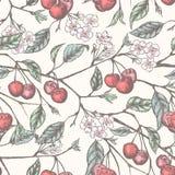 Cherry pattern 2 royalty free illustration