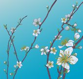 Cherry Peach Blossom Flowers Background-Patroon royalty-vrije illustratie