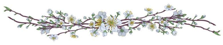 Cherry Peach Blossom Flowers Pattern stock illustration