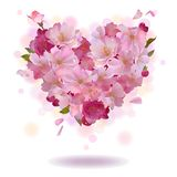 Cherry petal heart  on the white Royalty Free Stock Image