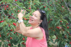 Cherry Picking Stock Photography