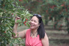 Cherry Picking Royalty Free Stock Images