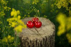 Cherry on a piece of wood Royalty Free Stock Photography