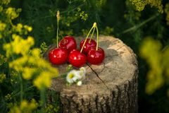 Cherry on a piece of wood Stock Photography