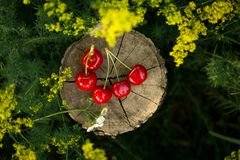 Cherry on a piece of wood Stock Photo